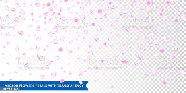 Flowers petals falling on vector transparent background vector id917611802?b=1&k=6&m=917611802&s=612x612&h=jn wh2ezrkg2spjlxq0am6 z468 q7pqmewhrxzp1go=