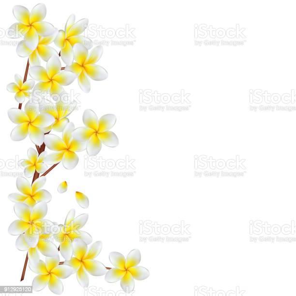 Flowers plumeria frangipani yellow spa tropical plants flower vector id912925120?b=1&k=6&m=912925120&s=612x612&h=k5alxcmjrmnola1ro0jdtf0 t8icxpvf3gxofdo4ss4=