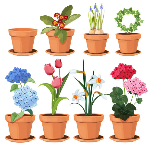 Flowers pot. Decorative colored plants grow at home in funny pots vector cartoon illustrations set isolated Flowers pot. Decorative colored plants grow at home in funny pots vector cartoon illustrations set isolated. Flowerpot and houseplant, tulip and geranium flower potted plant stock illustrations