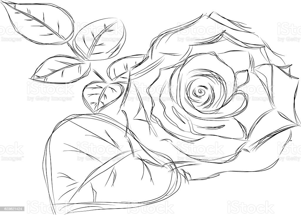 flowers rose sketch style, vector illustration