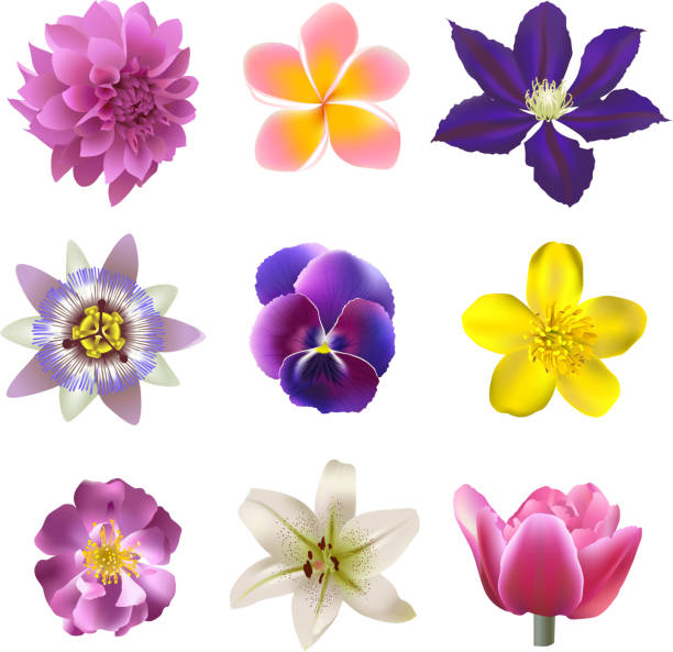 illustrazioni stock, clip art, cartoni animati e icone di tendenza di set di fiori - passiflora