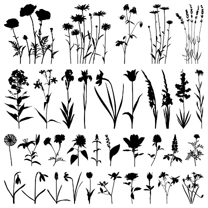 Flowers silhouette, vector images