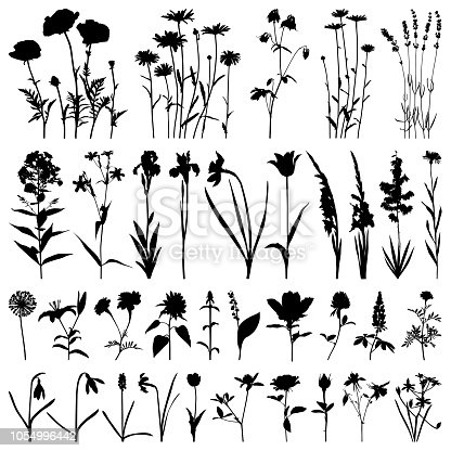 Set of plants silhouettes. Different flowers: daisies, poppies, irises, daffodils, gladioli, roses, marigolds, snowdrops, lavender. Detailed images isolated black on white background. Vector design elements.
