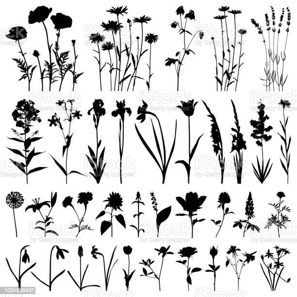 Flowers silhouette vector images vector id1054996442?b=1&k=6&m=1054996442&s=612x612&h=g1jbxey3yfur6vhedt69p1he61m  hh6w3e1mbtomoa=