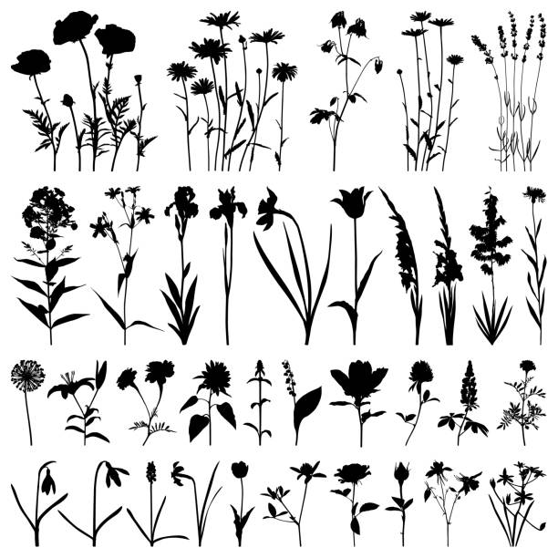 Flowers silhouette, vector images Set of plants silhouettes. Different flowers: daisies, poppies, irises, daffodils, gladioli, roses, marigolds, snowdrops, lavender. Detailed images isolated black on white background. Vector design elements. lavender plant stock illustrations