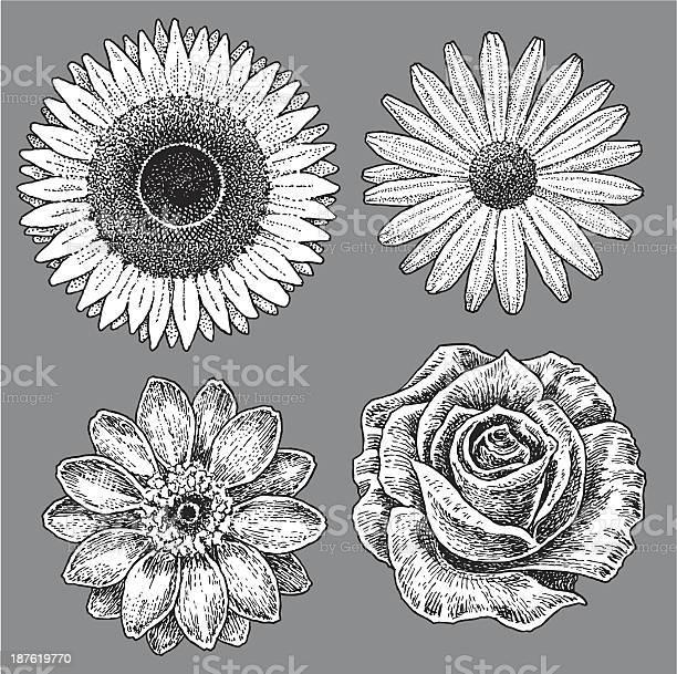 Flowers sunflower rose daisy zinnia vector id187619770?b=1&k=6&m=187619770&s=612x612&h=w1yxx6 ssiwyulkj1rv fdaw9dtzhjrdmcxuap94uys=
