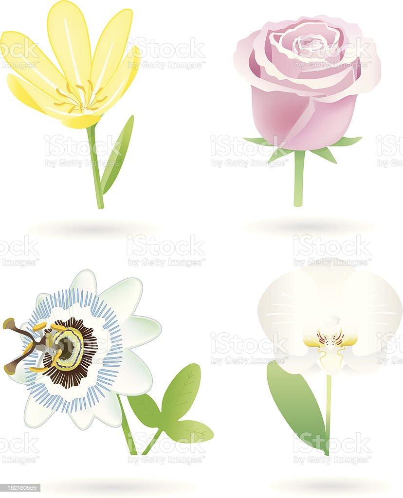 Flowers (4 Varios) royalty-free stock vector art