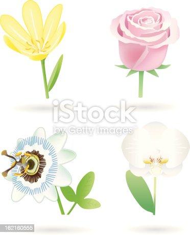 istock Flowers (4 Varios) 162160555