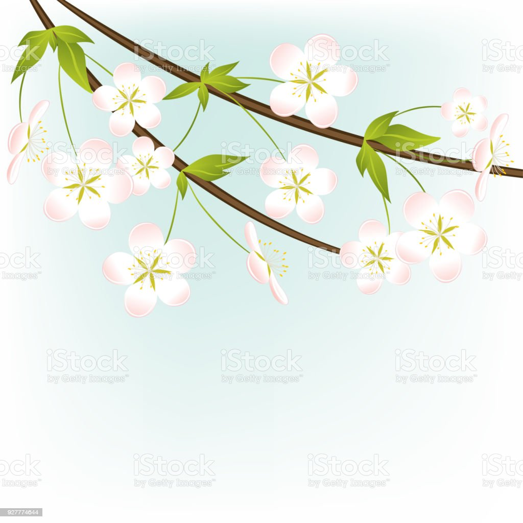Flowers White Floral Background Spring Plants Bouquet Sakura