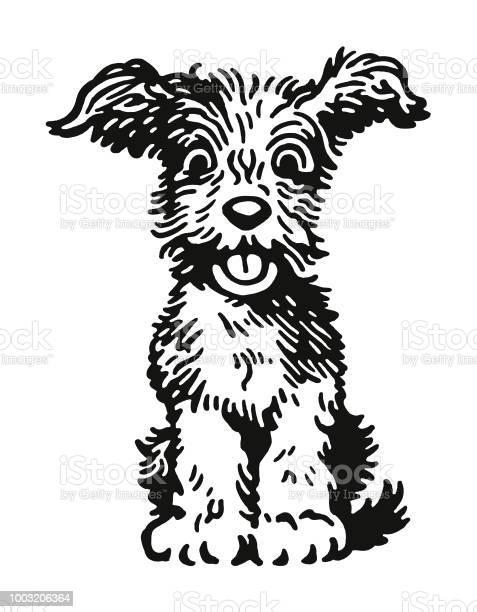 Fluffy dog vector id1003206364?b=1&k=6&m=1003206364&s=612x612&h=tkq5rfcjuefczlswywo7mnh3v9t1bpbv9l6gtbseasu=