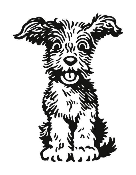 bildbanksillustrationer, clip art samt tecknat material och ikoner med fluffig hund - valp