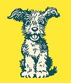 istock Fluffy Dog 1328196389