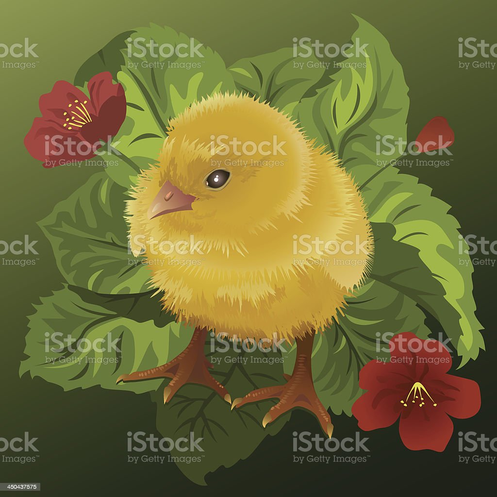 Fluffy yellow chick royalty-free stock vector art