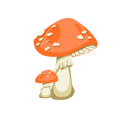 Fly Agaric, Red mushroom with white dots Cartoon Style Isolated Vector Illustration