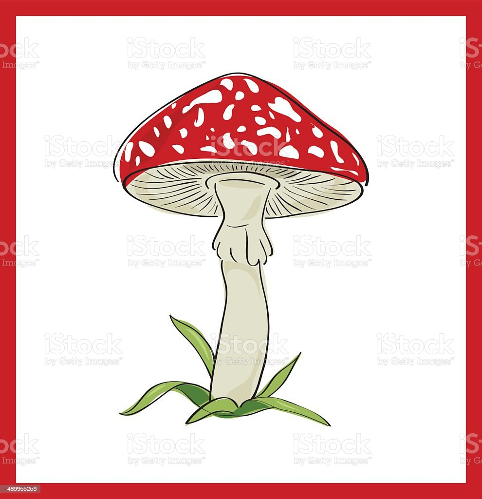 Fly agaric (death cup), vector illustration vector art illustration