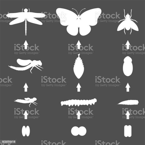Fly dragonfly butterfly silhouette emerging from chrysalis four vector id925518418?b=1&k=6&m=925518418&s=612x612&h=x1ytcwziovcfcuydptabkntafmtgmefn2bsnj3p2gqu=