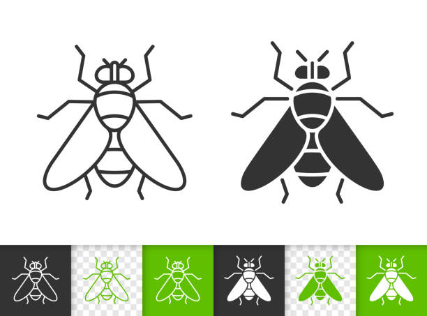 Fly insect simple black line vector icon Fly black linear and silhouette icons. Thin line sign of insect. Housefly outline pictogram isolated on white, color, transparent background. Vector Icon shape. Fly simple symbol close-up fly insect stock illustrations