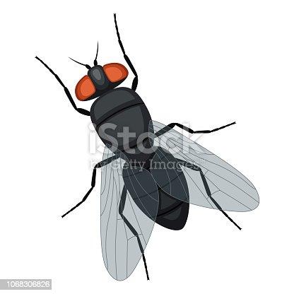 Illustrationen visar en fluga