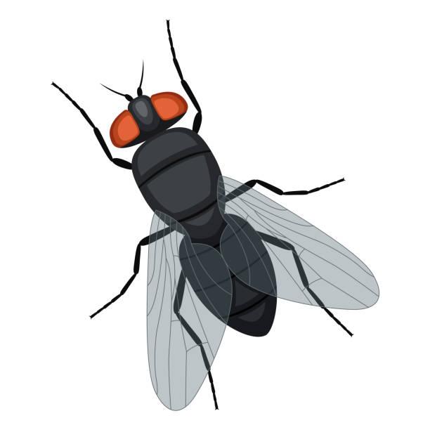 fly Illustrationen visar en fluga fly insect stock illustrations