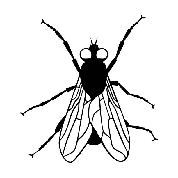 Fly Fly icon silhouette. Isolated black symbol on white background. Vector illustration fly insect stock illustrations