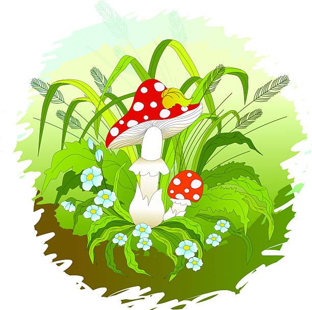 Fly-agaric mushrooms.  deleterious stock illustrations