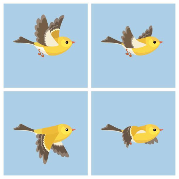 飛行美國金翅雀 (女) 動畫精靈片 - gif 幅插畫檔、美工圖案、卡通及圖標