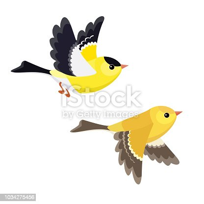 Vector illustration of cartoon flying American Goldfinch pair isolated on white background