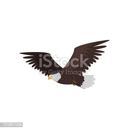 Flying bald eagle with large wings isolated on white background. Realistic cartoon bird character. Wildlife of north america concept