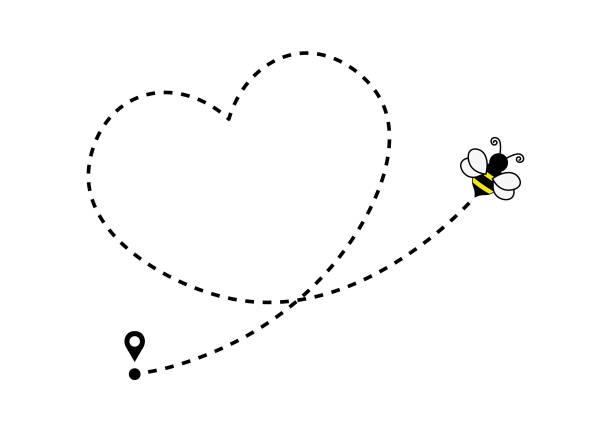 ilustrações de stock, clip art, desenhos animados e ícones de flying bee with heart shaped dotted route line - inseto himenóptero