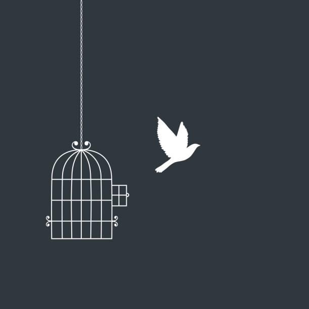 illustrations, cliparts, dessins animés et icônes de silhouettes d'oiseaux et cage de vol. - cage animal nuit