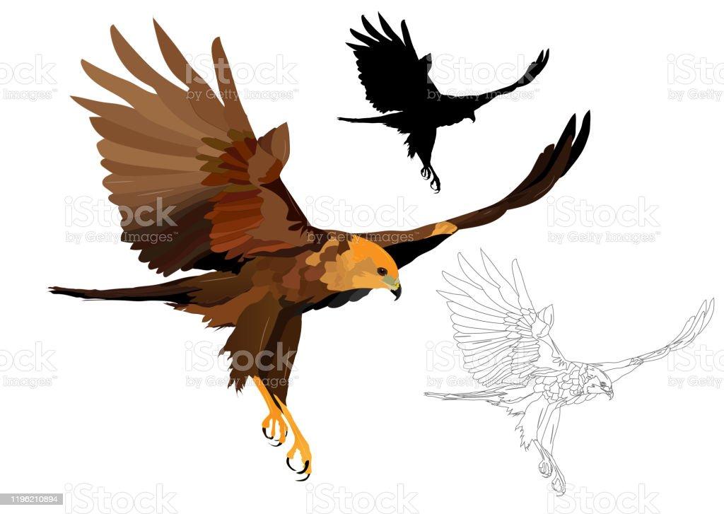 Flying Bird Bird Of Prey Vector Image White Background Stock Illustration Download Image Now Istock