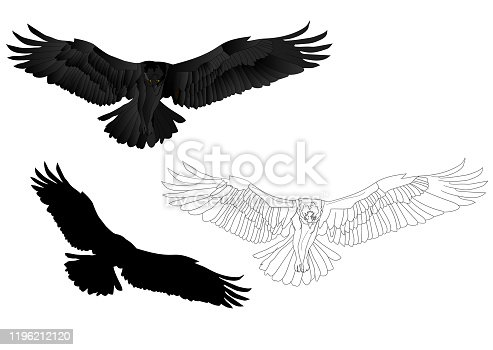 Vector image osprey