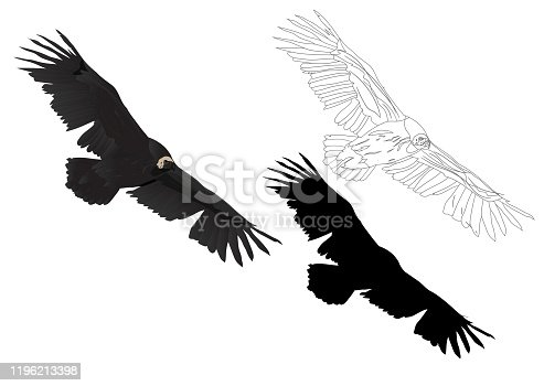Vector image vulture