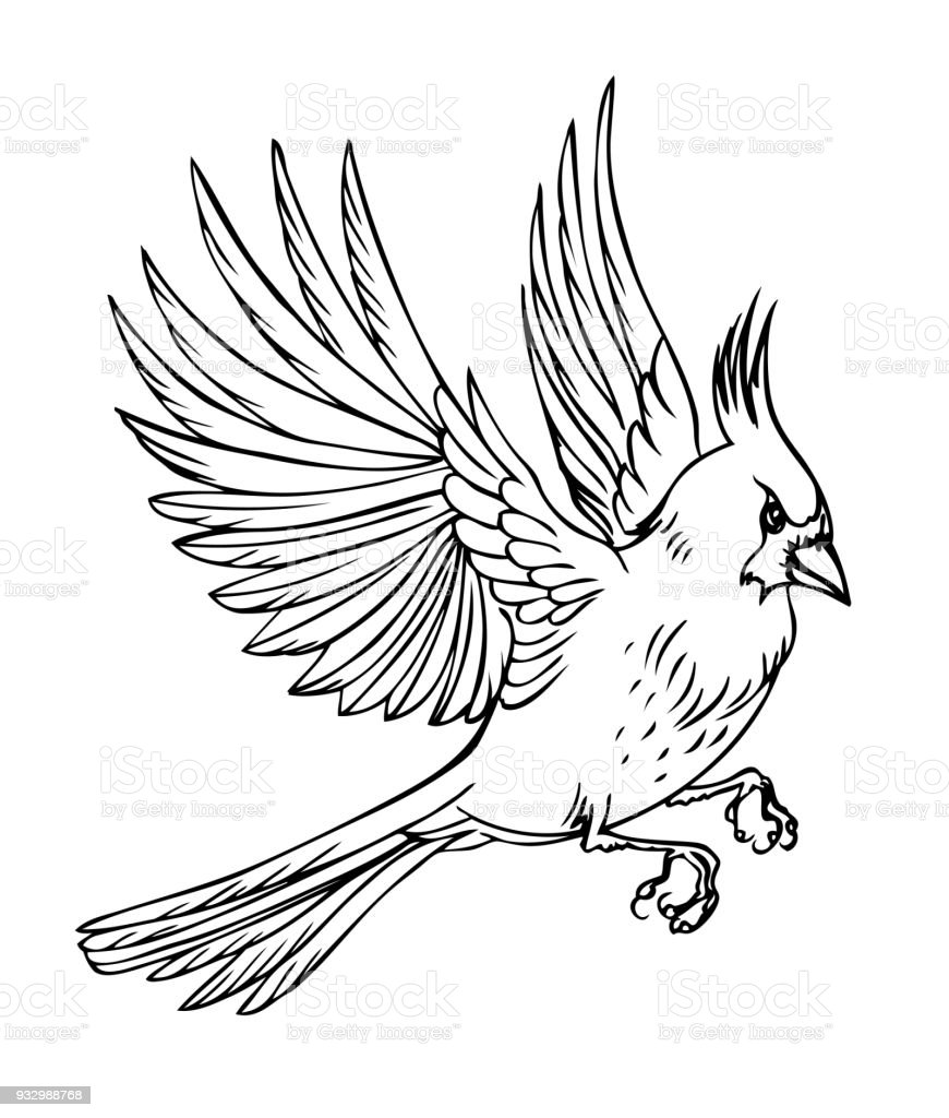 Cardinal Flying Silhouette Outline Wiring Diagrams Tda5140a Brushless Dc Motor Circuit And Datasheet Bird Stock Vector Art More Images Of Animal Rh Istockphoto Com