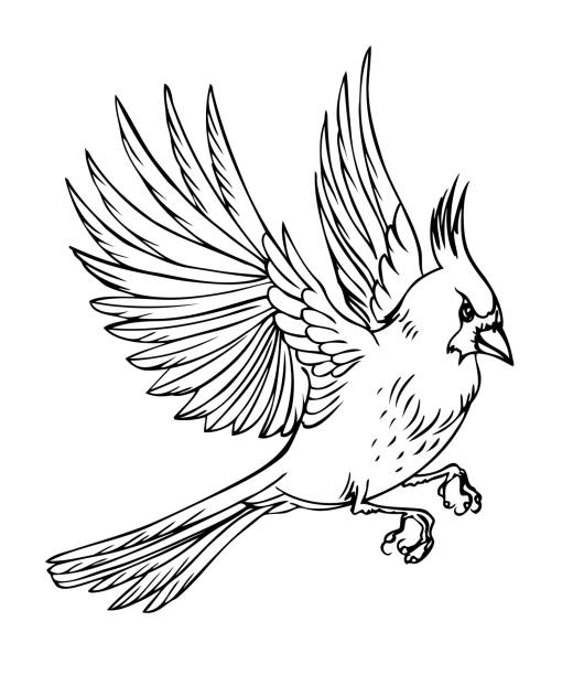 flying bird cardinal - cardinal mascot stock illustrations, clip art, cartoons, & icons