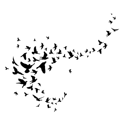 Flying birds silhouette illustration. Vector background