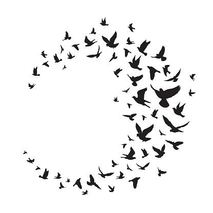 Flying birds silhouette illustration. Vector background - Vector