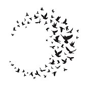 Flying birds silhouette illustration. Vector background - Vector