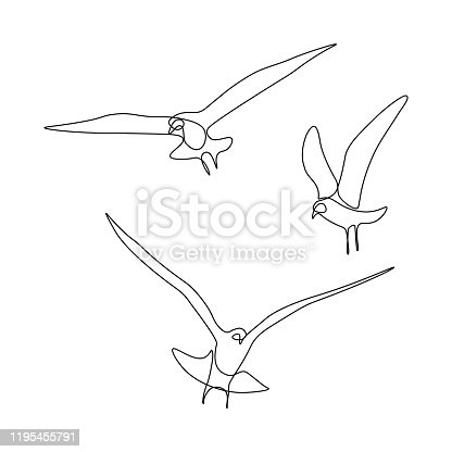 Flying birds in line art drawing style. Group of gulls black linear sketch on white background. Vector illustration