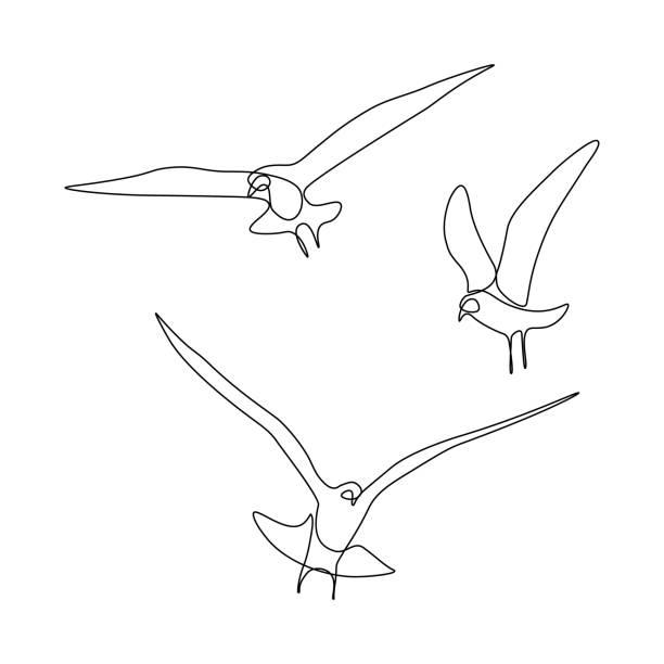 fliegende vögel - maul stock-grafiken, -clipart, -cartoons und -symbole