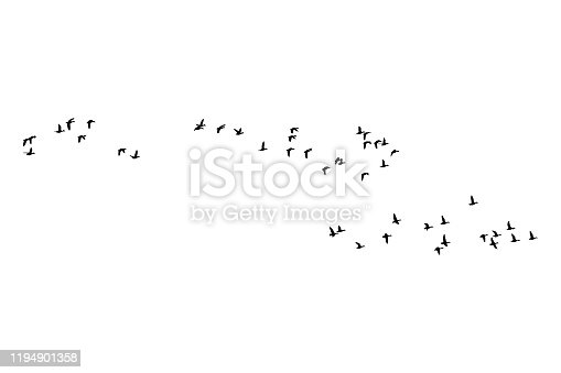 istock Flying birds. Vector image. White background. 1194901358