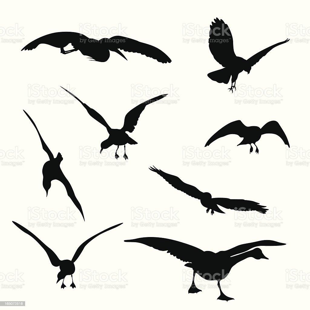 Flying Birds Vector Silhouette royalty-free stock vector art