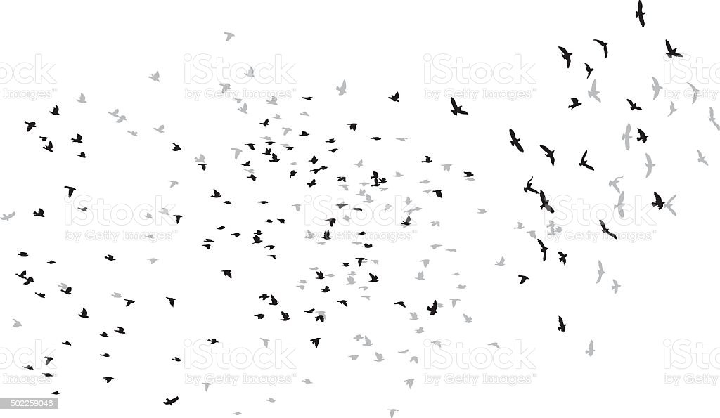 flying birds vector sketch vector art illustration