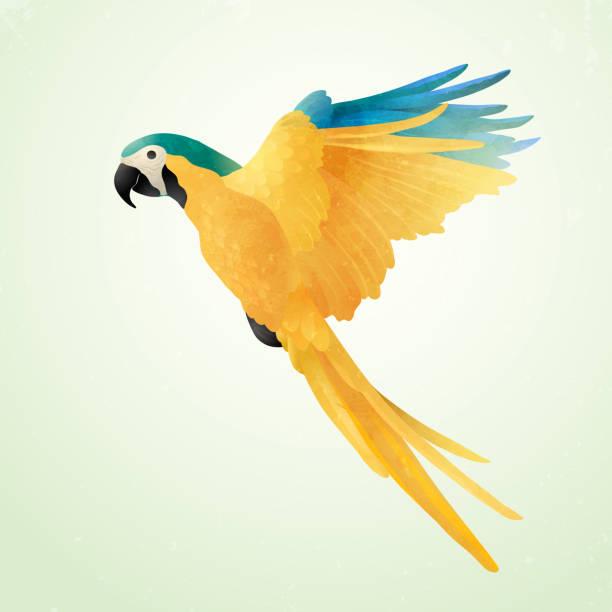 ilustrações de stock, clip art, desenhos animados e ícones de flying blue and gold macaw isolated on light background. watercolor on paper craft style of brazilian ara. - arara