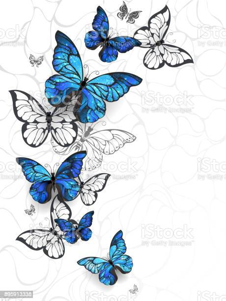 Flying butterflies morpho vector id895913338?b=1&k=6&m=895913338&s=612x612&h= yihrxnipn51p33afrcxdr7 urszanvavhzvewgl 6u=