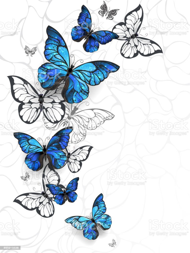 Flying butterflies morpho vector art illustration