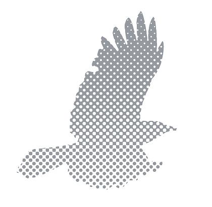 Flying Crow