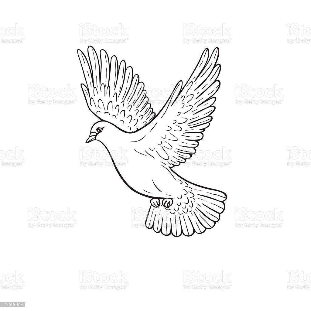 Flying Dove Stock Vector Art & More Images of Animal Body ...