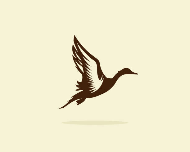 Flying duck vector illustration, duck icon or symbol, duck hunt Flying duck vector illustration, duck icon or symbol, duck hunt duck stock illustrations