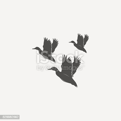flying ducks in grayscale style - vector illustration